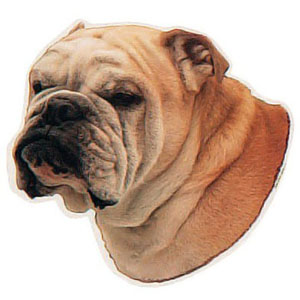 Englische Bulldogge Hundeaufkleber